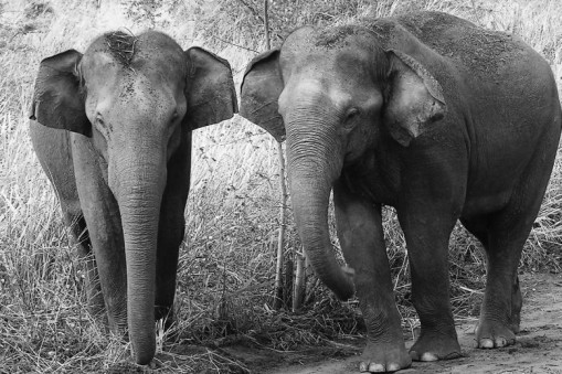 olifantenudawalawa