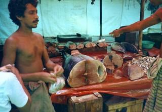 matugamamarktvis