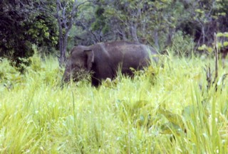 olifantinhetwild