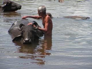 manmetbuffel